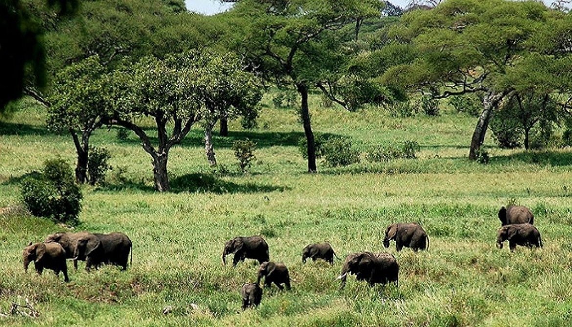 INVITATION FOR THE APPLICATIONS FOR INVESTMENT IN NON-CONSUMPTIVE WILDLIFE UTILIZATION IN WMAs